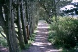 Foot Path to Dunes